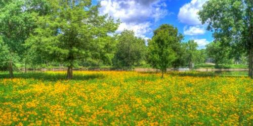 City Park with wild flowers in bloom