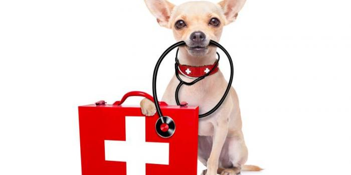 1st Annual Dog Health Fair