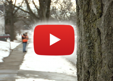 Iowa City tree inventory video