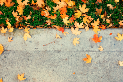 A photo of leaves on the sidewalk.