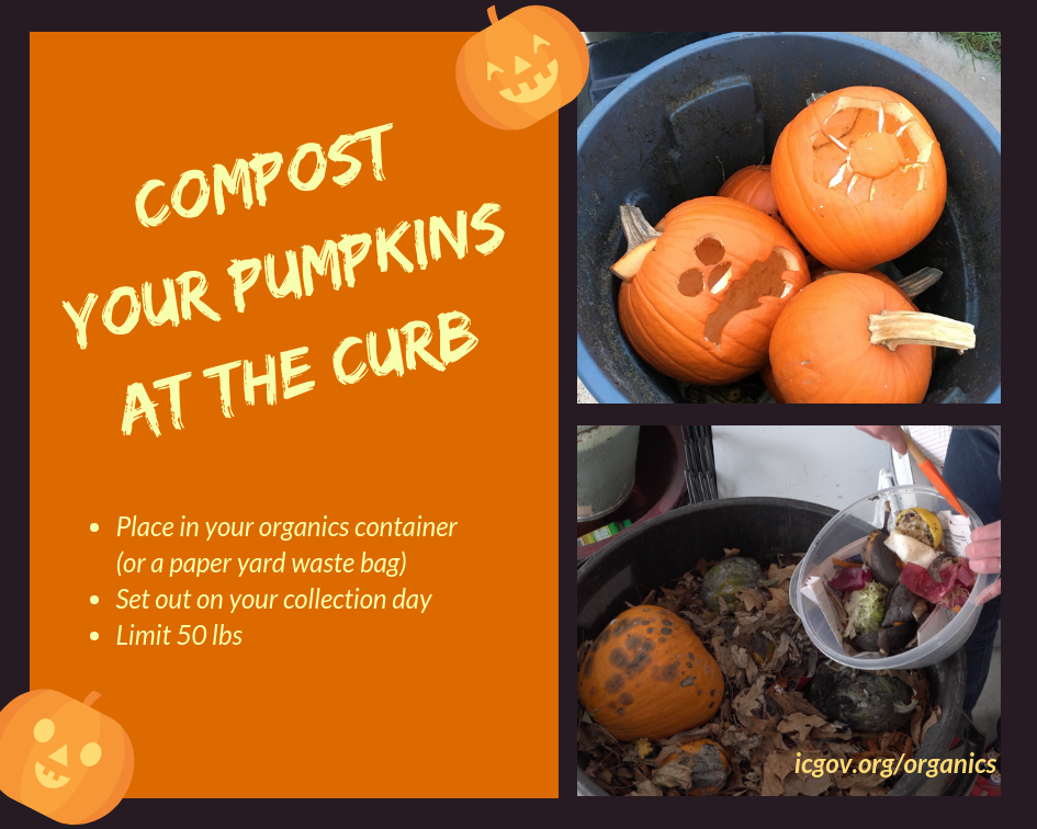 Compost your pumpkin graphic